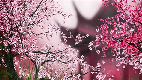Amio Id Gamis Pink Blossom live wallpaper android apps on play