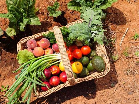 vendita alimenti biologici big one ingrosso prodotti alimentari e bevande