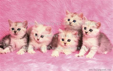 kitties  pink friendly cuddly cute cats