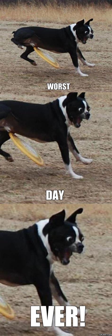 Bad Dog Meme - funny bad dog memes