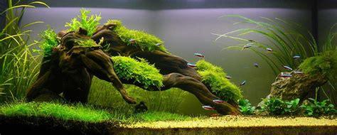 Driftwood Aquascape by Simon S Aquascape