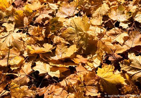 Garten Pflanzen Winterfest Machen by Den Garten Winterfest Machen Garten Hausxxl Garten