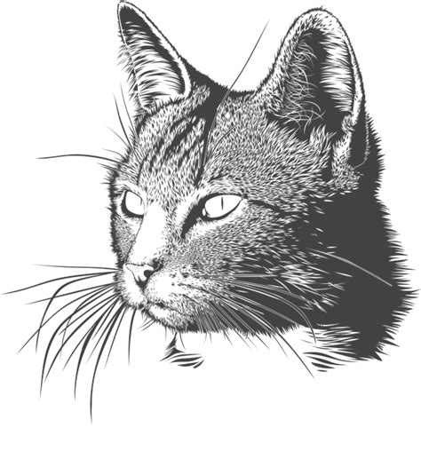 imagenes sin fondo se llaman 8 fantastic benefits of owning a cat