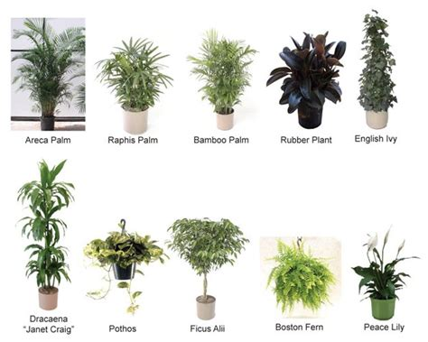 top  house plants  clean  air body mind soul