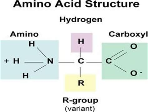 protein macromolecule proteins amino acid structure monomers of proteins