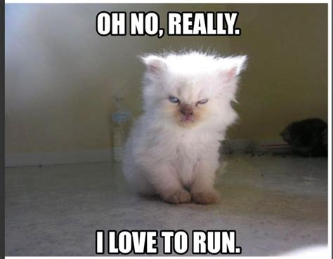 Cat Gym Meme - fitness funny fitness meme angry cat i hate running i
