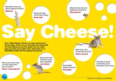 some cheese jokes to cheer up your winter cheesy jokes