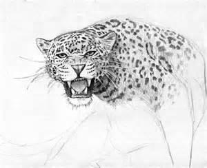 Drawings Of Jaguars Jaguar By Dashinvaine On Deviantart