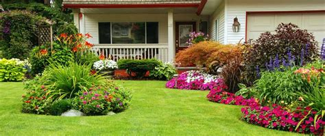 St Garden Vs how to plant grass seed