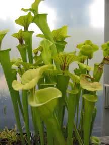 Inside Herb Garden Care For Carnivorous Plants