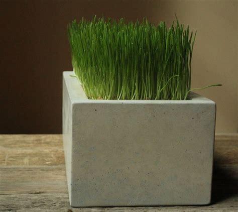 Concrete Planter Boxes by Concrete Box Planter