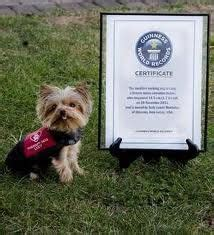 yorkie seizure symptoms 45 best images about diabetic alert dogs on type 1 diabetes type one