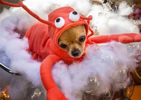 puppies in costumes snap dogs in costume for parade