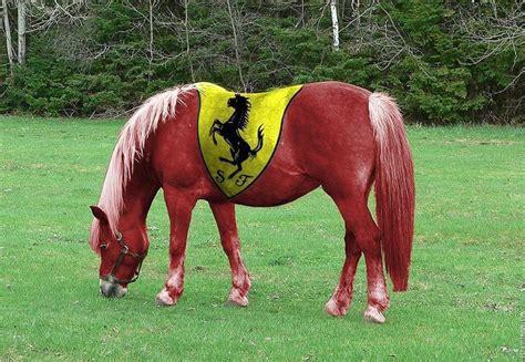 Ferrari Pferd by Ferrari Horse F1 Pinterest