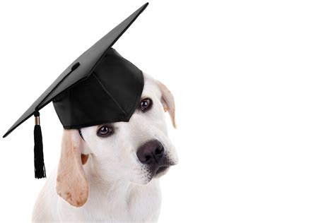 puppy graduation pets go back to school