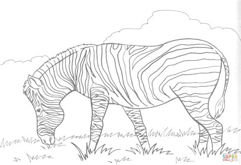 aardvark to zebra animals of africa coloring book books coloriage z 232 bre qui broute coloriages 224 imprimer gratuits