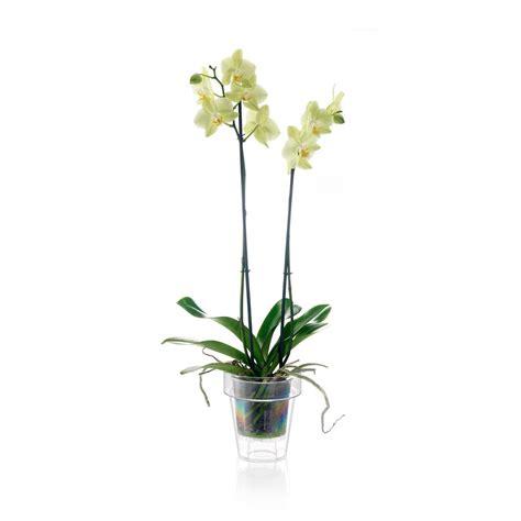 vasi per orchidee vaso per orchidea trasparente vendita