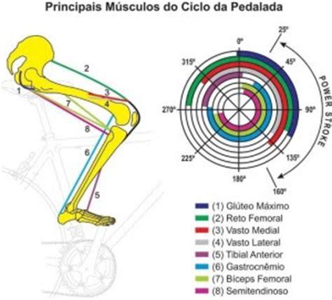 cadenas polipeptídicas que es mais um cicloturista principais m 218 sculos do ciclo da