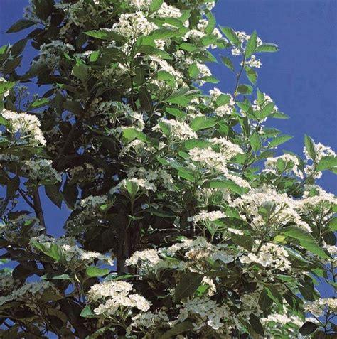 fiori in russia piante per ornare parchi e giardini