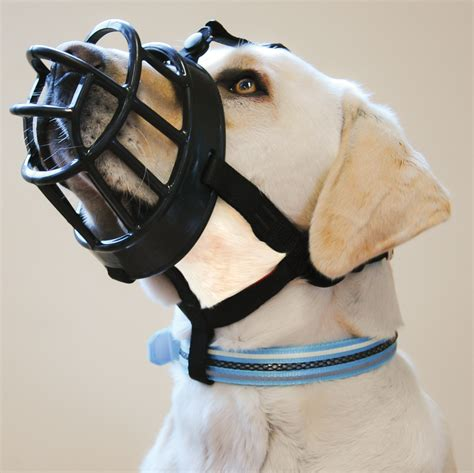 muzzle for dogs company of animals baskerville ultra muzzle for dogs