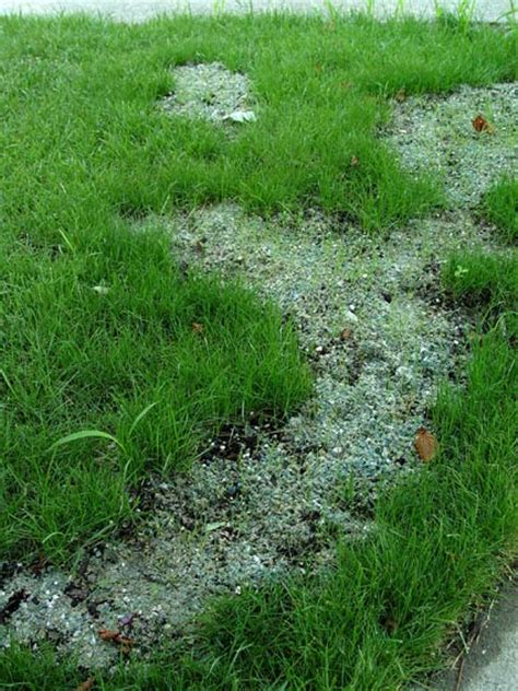 how to fix dead patches in the lawn greenview fertilizer