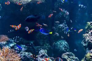 Nemo 3d Aquarium Wallpaper: Finding Nemo Fish Image Aquarium Wallpaper