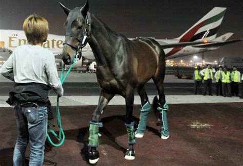ek skycargo fliy  top race horses  dubai world cup