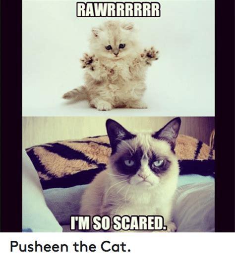 Pusheen The Cat Meme - funny pusheen memes of 2017 on sizzle boxing