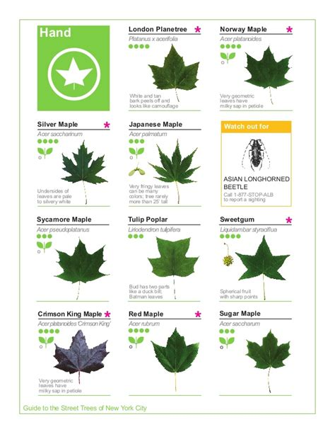 leaf version for what is a guide to biology books maple leaf identification guide search results global