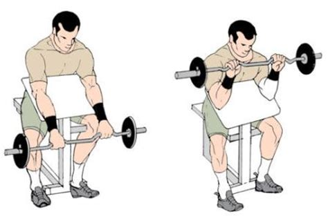 preacher curls without bench reverse preacher bench curls to build biceps and forearm muscles