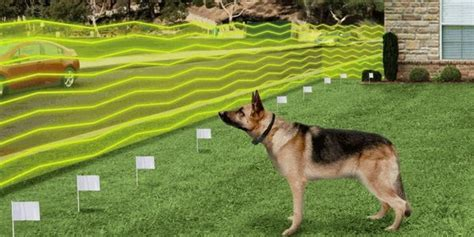 wireless fence for small dogs best wireless fences that are safe detailed guide