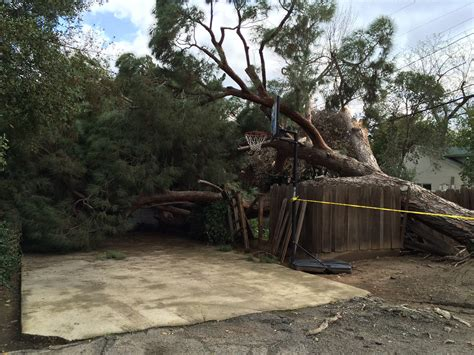 tree in fresno a tree falls in fresno who s at fault kmj af1