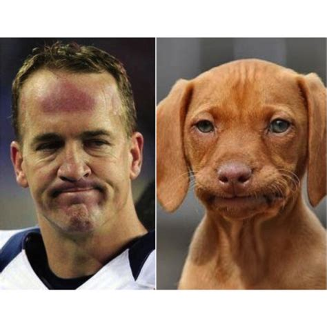 looking dogs 10 photos of dogs looking exactly like peyton manning 6 is just