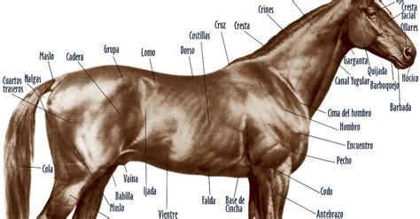 caballo cogida brutal por detras caballos partes del cuerpo del caballo