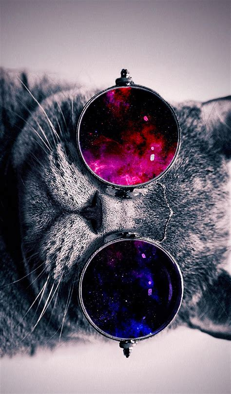 iphone wallpaper cat glasses cat with cosmos glasses animal hd wallpaper 19 by mrhaosac