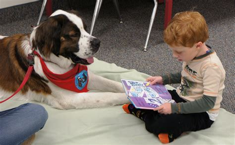 reading to dogs 19 adorable dogs that are ready for autumn leaves