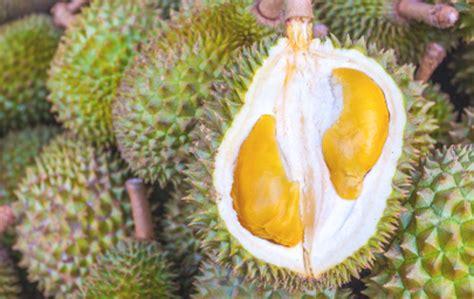 malaysia punya durian udang merah    lezat