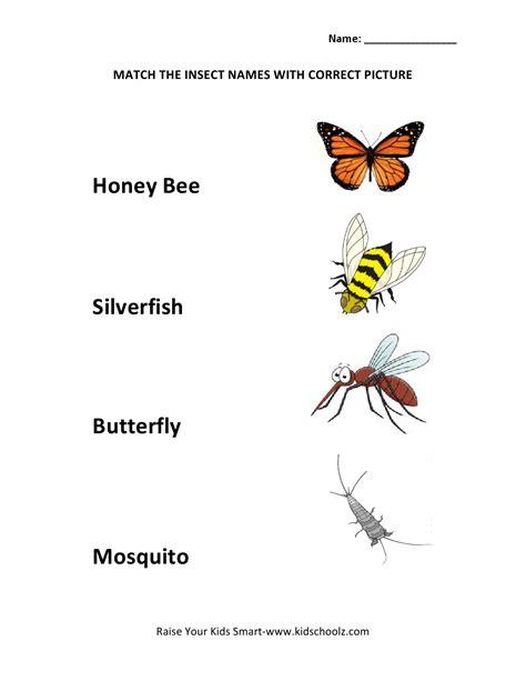 insects for kindergarten insect worksheets kindergarten wallpapers gallery