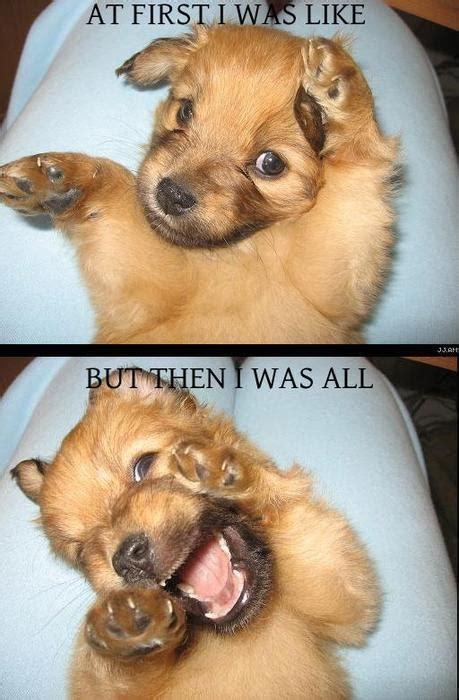 silly puppies puppies emotions lol pictures and