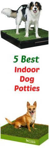 indoor dog bathroom solutions 1000 images about all things dogs on pinterest your dog