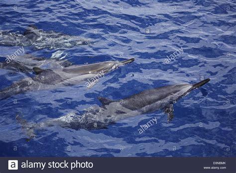 dolphin blowhole stock photos dolphin blowhole stock
