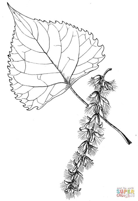 ash leaf coloring page kinderart com ash leaf coloring page coloring pages