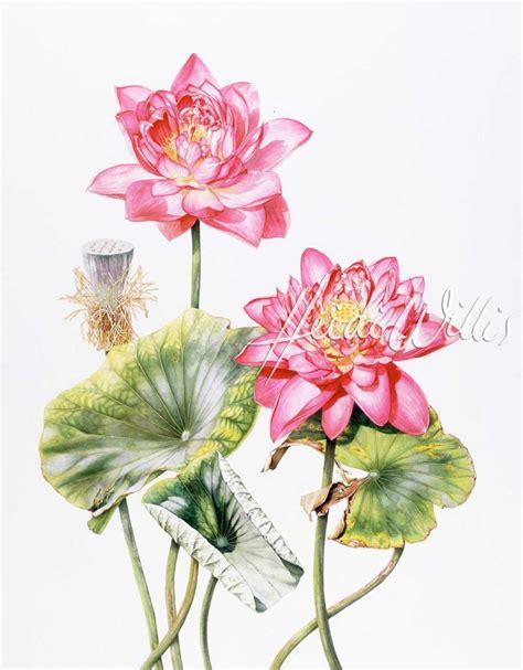 watercolor lotus tutorial watercolor lotus のおすすめ画像 129 件 pinterest 水彩蓮 中国の絵画 中国人