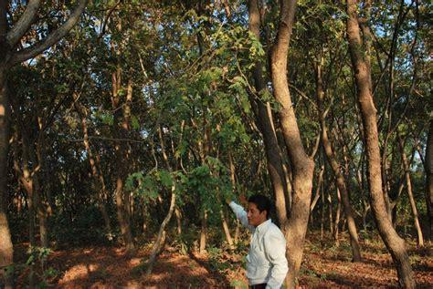 el otro arbol de 8484691594 guayaquil una ciudad de cemento que desplaz 243 al bosque