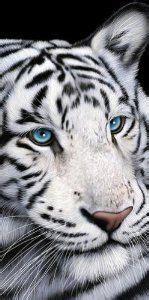 tiger bathroom designs busty buffy lucy wild pinterest