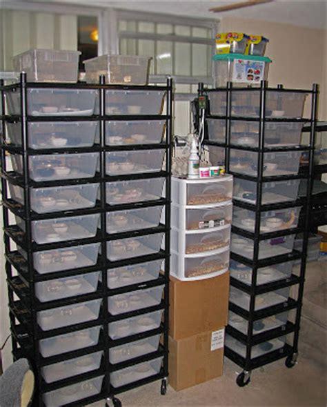 Leopard Gecko Racks by Leopard Geckos Vision Racks Update