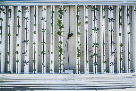 giardini verticali per interni giardini verticali da interno arredamento