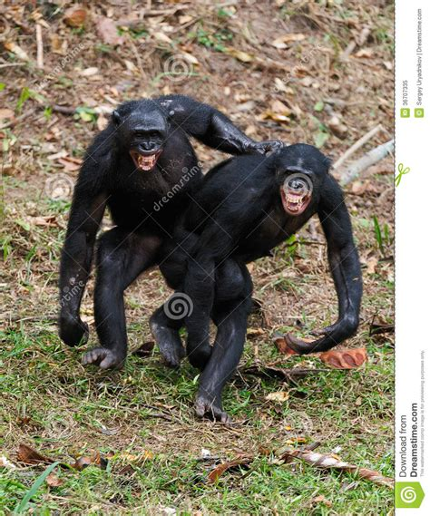 mating video of african people african people mating just b cause