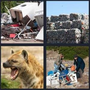 4 pics 1 word answer for trash landfill hyena rummage