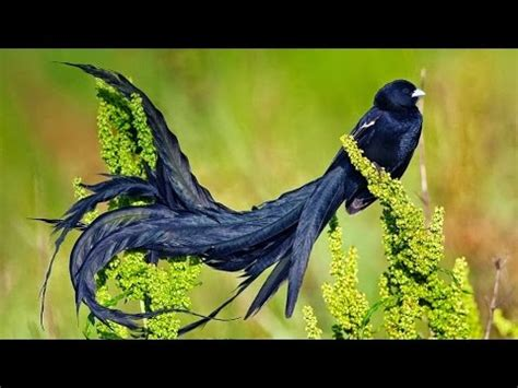Birds Of The World 365 Days most beautiful birds in the world